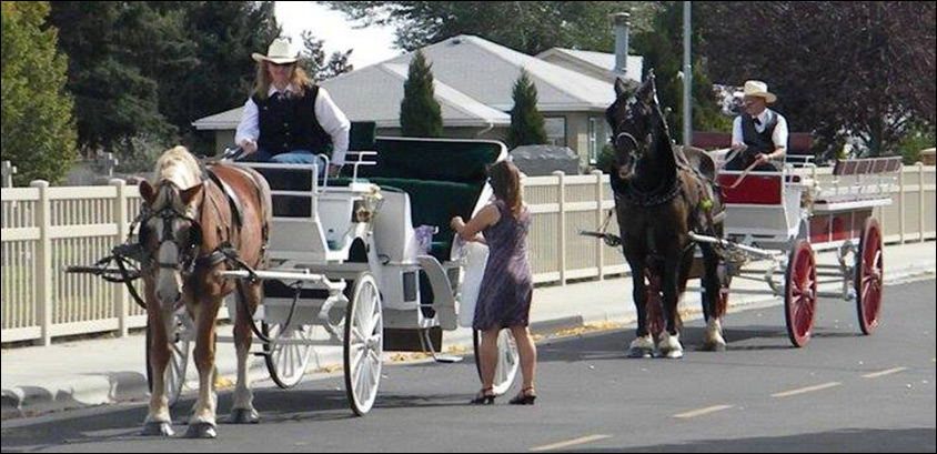 Horse Carriage in a row